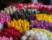 Prodaja med občinami in okrasne rastline