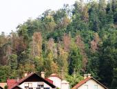 Vlada je razširila upravičene stroške pri sanaciji gozdov