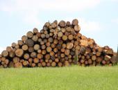 Naložbe v predindustrijsko predelavo lesa