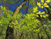 Vabilo na predstavitev gozdarskih razpisov 20...