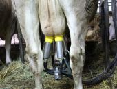 Prireja kravjega mleka