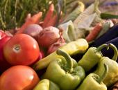 Člani odbora so izrazili zaskrbljenost v zvezi s proizvodno vezanimi plačili za zelenjadnice (PVP), saj ugotavljajo, da ukrep za pridelovalce zelenjave ni stimulativen.