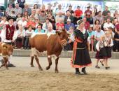 Razstava in ocenjevanje govedi