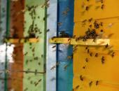 Pred vrati praznovanje svetovnega dne čebel