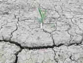 Posledice aprilske suše na kmetijskih rastlin...