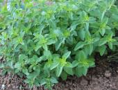 Davčna obravnava pridelave zelenjadnic in zel...
