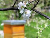 Prepoved premikanja čebelnjakov in čebeljih d...