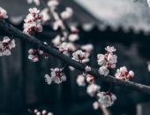 Sredstva za zdravje rastlin že v Sloveniji
