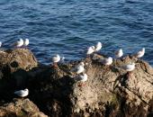 Sredstva so namenjena povračilu škode po kormoranih na območju NATURE 2000.