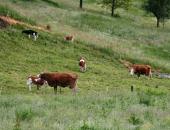Posvet Seneno mleko in meso - razvojna prilož...