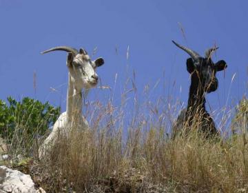Vabljeni na 12. Agrobiznisov posvet o živinoreji in mesnopredelovalni industriji