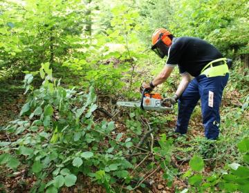 Zdaj je čas, da izpostavite vaše probleme, ki jih imate pri gospodarjenju z gozdovi ali zaradi divjadi, da se usmeritve za odpravo vaših problemov lahko vnesejo v spremembe načrtov.