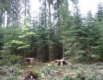 Evropski in slovenski lastniki gozdov zahtevajo pojasnila