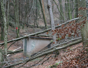 Nujna izvedba del v gozdu