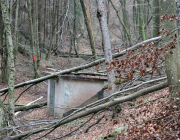 RAZPIS: sredstva za sanacijo gozdov