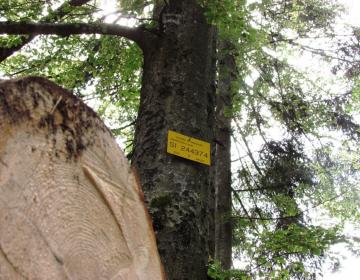 Gozdarstvo še čuti posledice koronavirusa