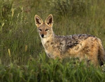Sprememba Zakona o divjadi in lovstvu