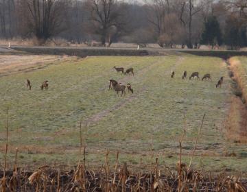 Strokovni odbor za gozdarstvo in lovstvo pri KGZS