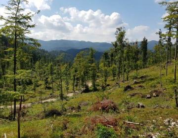 Znan izpad dohodka v gozdarstvu zaradi epidemije