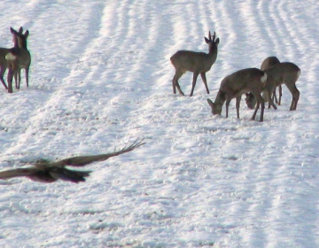 Čas za pripombe na načrte lovsko upravljavskih obm...