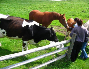 Zaradi neupravljanja z zvermi so na podeželju poleg živali vse bolj ogroženi tudi ljudje