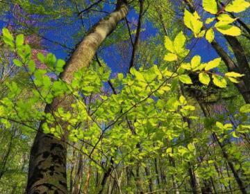 Vabilo na predstavitev gozdarskih razpisov 2020