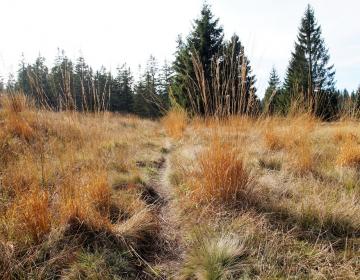 V obravnavi pomemben dokument za območja Natura 20...