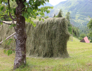Odbor predlaga MKGP, da poišče vzvode, mehanizme in ukrepe, da mlade zadržijo na hribovskih kmetijah.