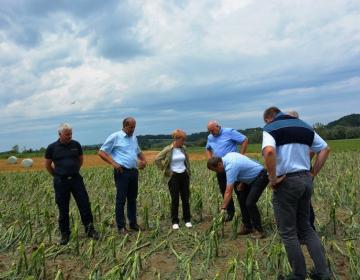 Na ogledu škode, ki jo je povzročilo neurje v okolici Ptuja. (Foto: MKGP)