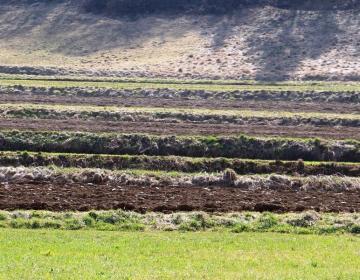 Določitev dejanskega uporabnika kmetijskih in gozd...