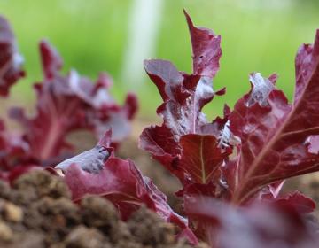 Kako začeti z ekološkim kmetijstvom
