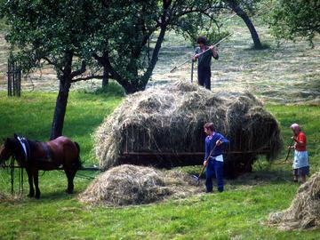 Za skupna stališča do skupne kmetijske politike