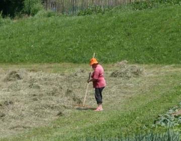 Skupna kmetijska politika: preveč nejasnosti in pr...