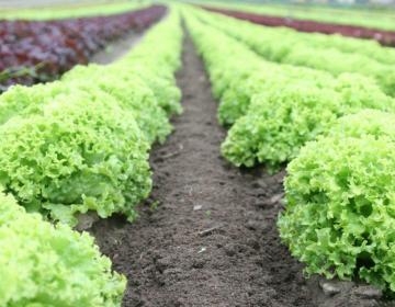 Slovensko kmetijstvo med in po epidemiji