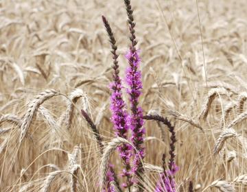 Skupna kmetijska politika po 2020