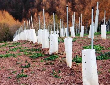 Letom se vlogi za sredstva in izjava o posaditvi vinograda (zahtevek za sredstva), oddata izključno elektronsko.