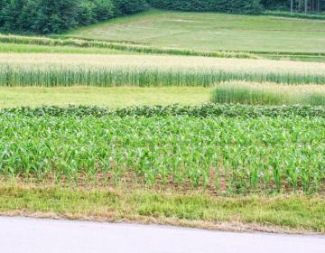 Spremembe se med drugim nanašajo tudi na pridelavo strnih žit in koruze.