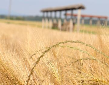 Anketa o viziji razvoja slovenskega podeželja
