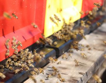 Med novimi gradivi so tudi vsebine z ekološkega čebelarjenja.