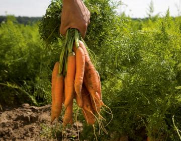 V ospredju izbrana kakovost za zelenjavo in proizv...