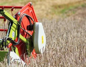 Odkupna cena pšenice prenizka