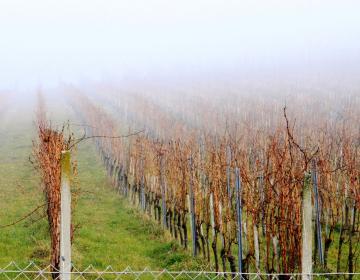 Pomembno za vinogradnike!