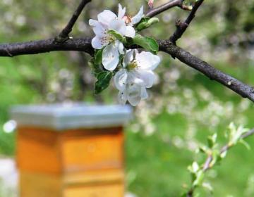 Prepoved premikanja čebelnjakov in čebeljih družin