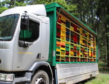 RAZPIS: Nepovratna sredstva za čebelarje