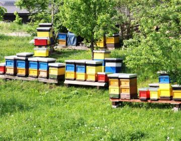 Sredstva so na voljo za nakup opreme, prevoze čebel in vzrejo matic.