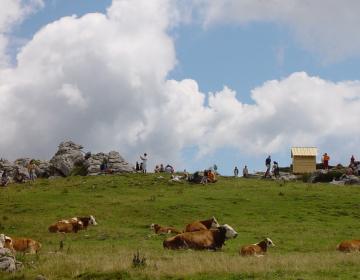 Zaključna prireditev ocenjevanja dobrot s slovenskih kmetij bo v začetku septembra.