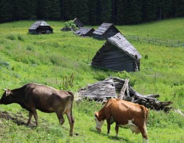 Če ne bo živinoreje, kdo bo skrbel za obdelanost in poseljenost območij z omejeno možnostjo pridelave