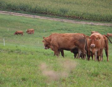Obvestilo za ekološke kmete