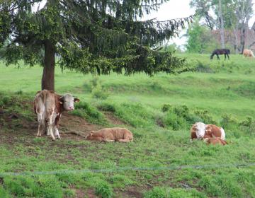 Agrarne skupnosti omogočajo gospodarjenje na po produktivnosti večinoma šibkih rastiščih.