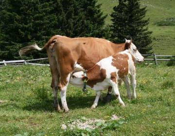 Finančna pomoč v prireji govejega mesa